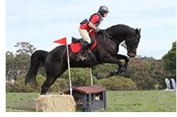KlebeSCommeIlFau horse